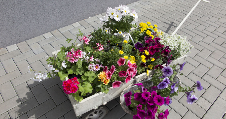 Letničky a bylinky